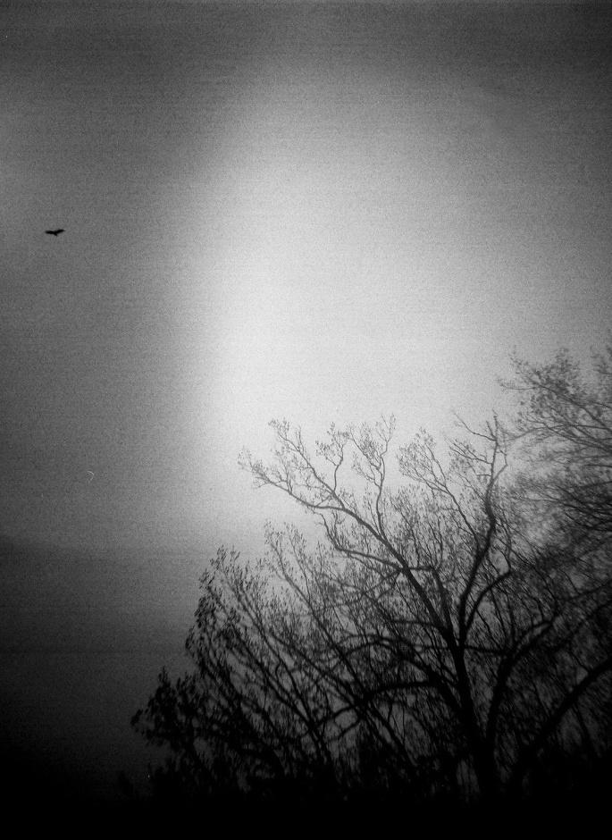 Lone Bird, Dark Sky